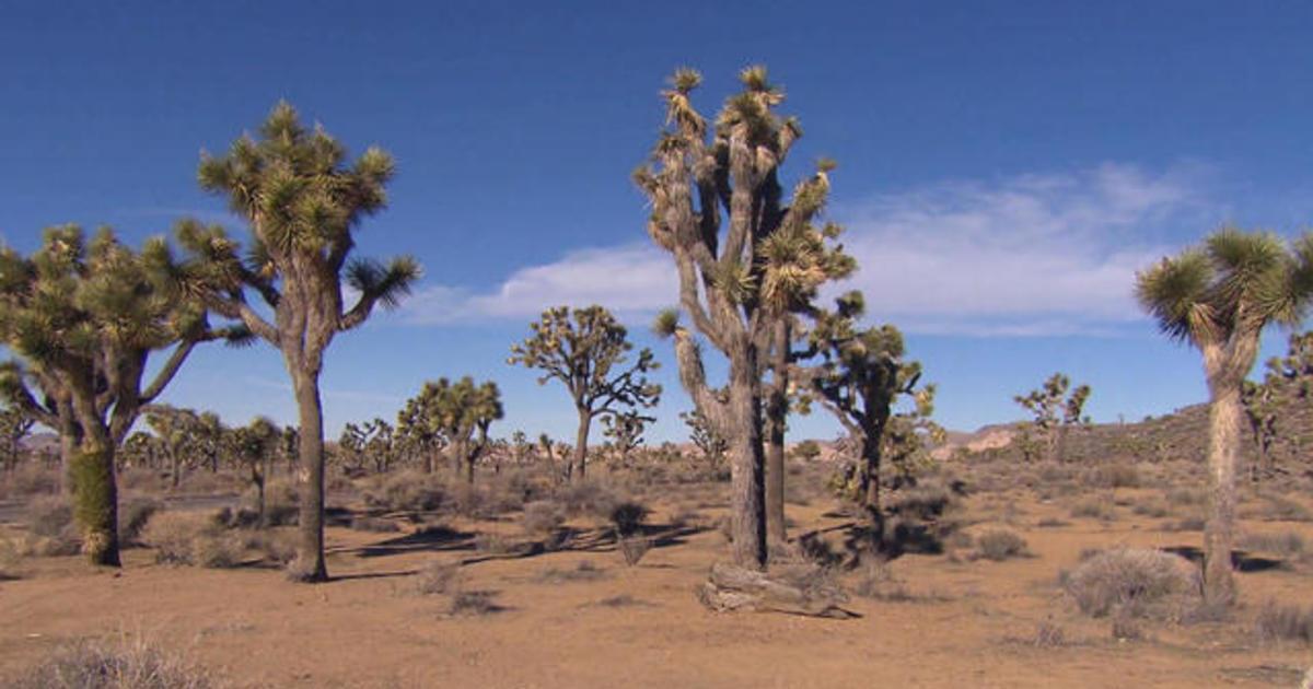 On The Trail: Joshua Tree