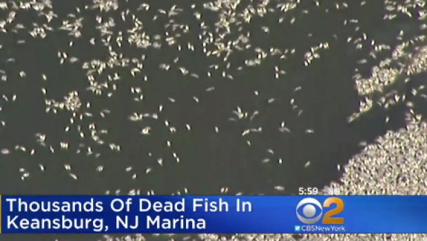 Thousands of fish die in creek in New Jersey