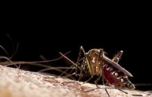 Zika mosquitoes found in Florida