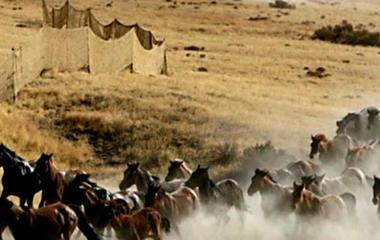 Government board votes to kill 45,000 wild horses