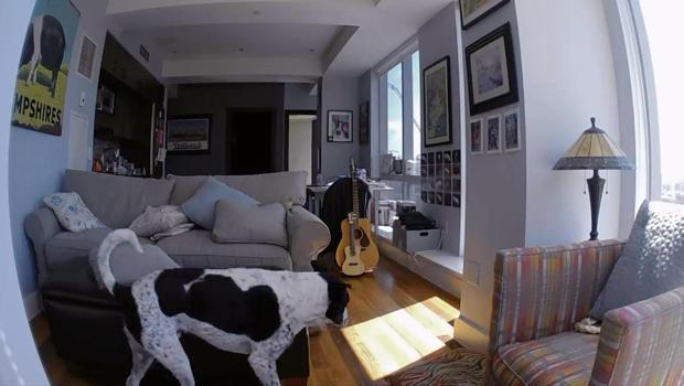 doggie-cam-view-620.jpg