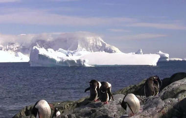Antarctic ice shelf at risk of collapse within 100 years
