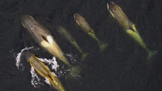 菲利普斯南极洲杀手-鲸帧-2869.jpg