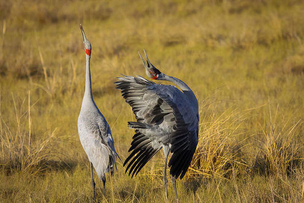 11 animals with truly unusual courtship rituals