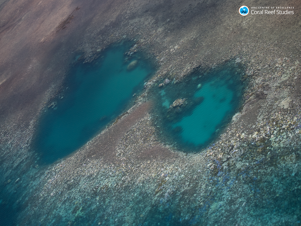 aerial-view-of-widespread-coral-bleaching-northern-great-barrier-reef.png