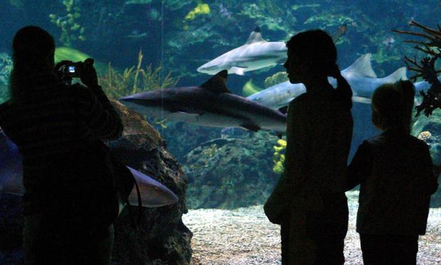Amazing tales of virgin births in the animal kingdom