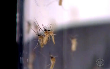Zika outbreak in Texas ahead of mosquito season