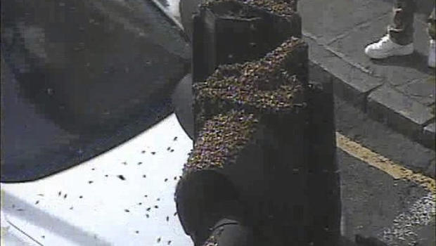 Social media abuzz as flying insects swarm part of London