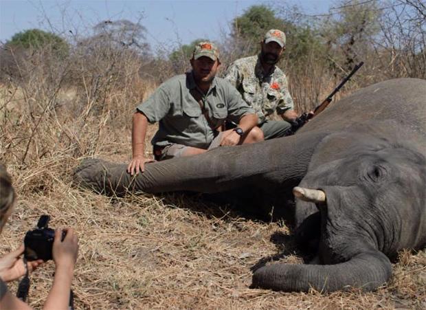 奖杯大象hunt.jpg
