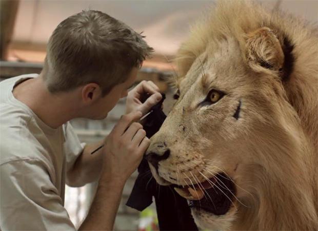 奖杯动物标本制作与 -  lion.jpg