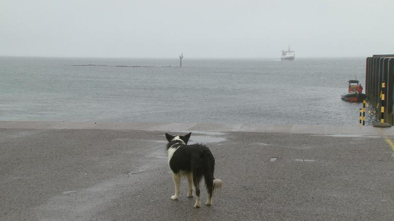 dog-looking-at-ferry.jpg