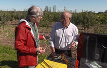 A demonstration of grafting apple trees