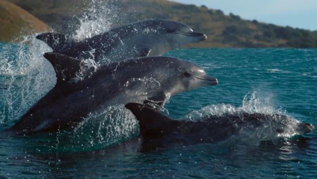 蓝色行星瓶,海豚冲浪-620.jpg