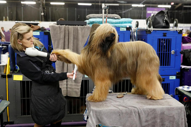 Westminster Kennel Club Dog Show 2018