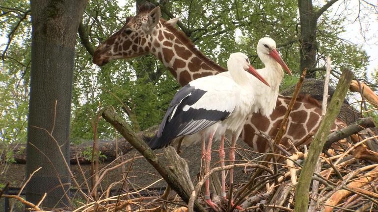 giraffe-birds.jpg