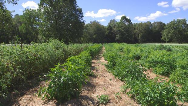 凯霍加谷,国家公园农场行-的作物 -  620.jpg