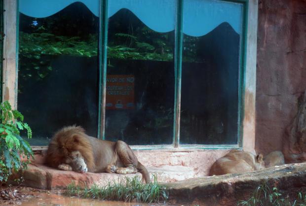 危机中的波多黎各动物园