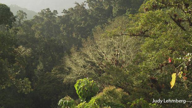 寻找下 - 到 - 在哥斯达黎加,哥斯达黎加,云森林在洛杉矶,格查尔 - 国家公园后-A-雨朱迪 -  lehmberg-620.jpg