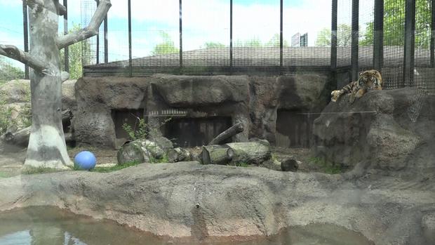 托皮卡,堪萨斯州动物园老虎攻击01.png
