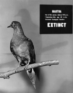 martha-passenger-pigeon-smithsonian-244.jpg