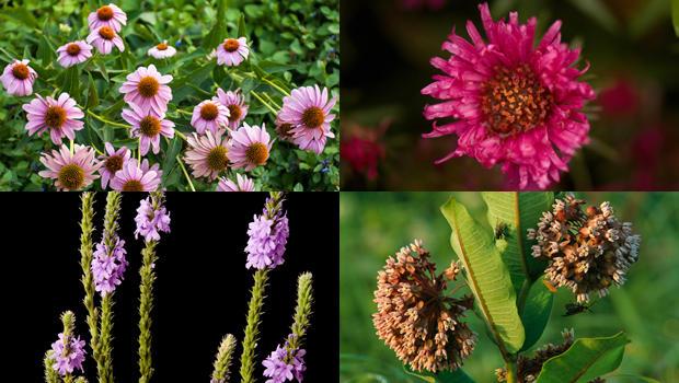 joel-sartore-flowers-620.jpg