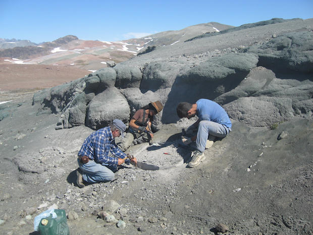8-chilesaurus-diegosuarezi-excavating-a-skeleton-in-beds-of-the-toqui-formation-southern-andes-chile-dr-fernando-novas.jpg