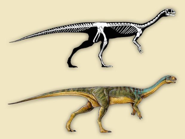4-chilesaurus-diegosuarezi-skeleton-and-live-reconstruction-gabriel-lo.jpg