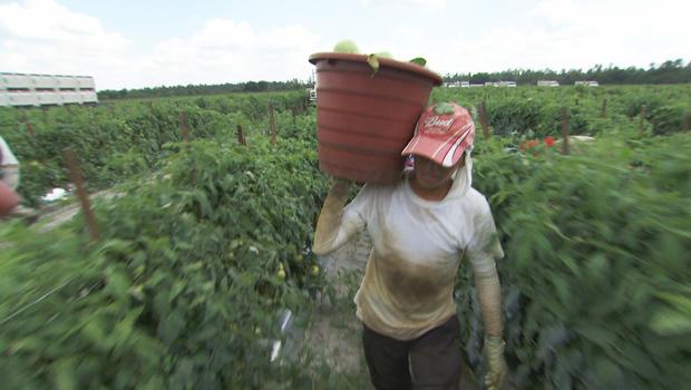 farm-worker-620.jpg
