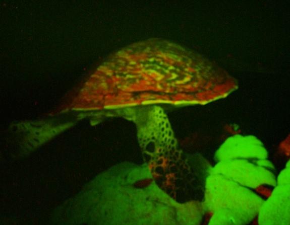bioluminescent-turtle-2.jpg