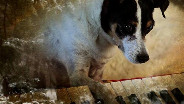 heart-of-a-dog-keyboard-620.jpg