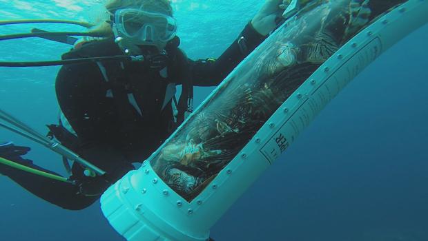 lionfish-captured-620.jpg