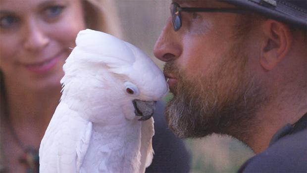 parrots-matt-simmons-phoebe-620.jpg