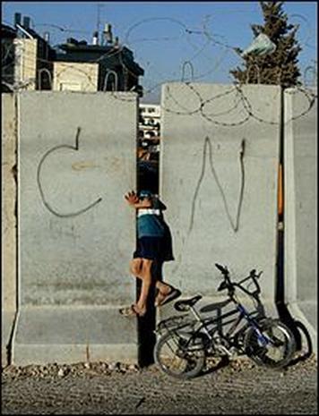 dividing fence