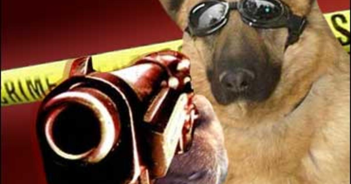 dog shoots man  that u0026 39 s news