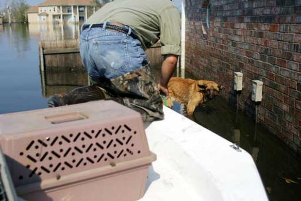 One Dog's Rescue