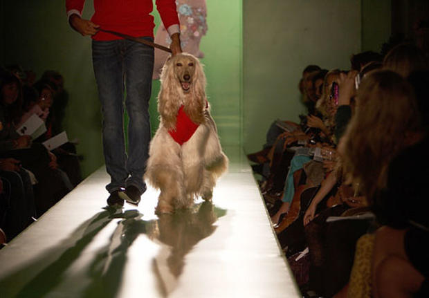 Dogs On The Catwalk