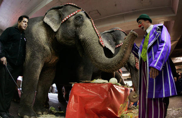 End of an era for Ringling Brothers circus elephants