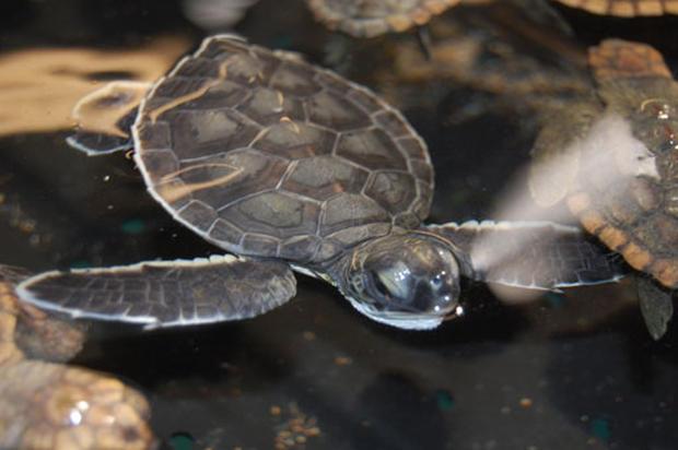 Saving Sea Turtles