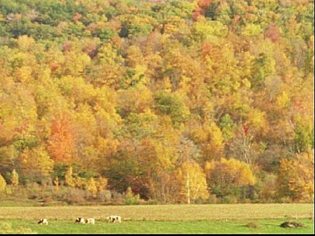 U.S. Guide For Leaf Peepers