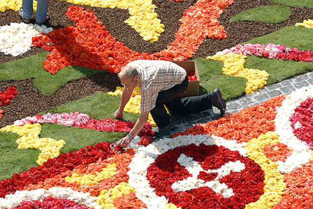 Brimming With Begonias