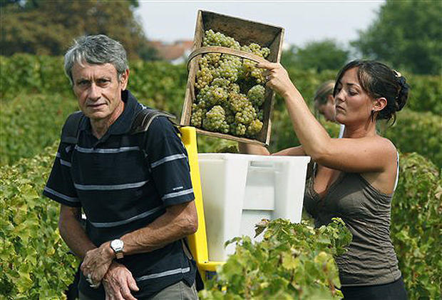 France's White Wine Harvest