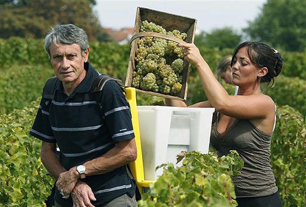 France's White Wine Harvest