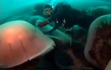 Giant Jellyfish Threaten Japan Fishing
