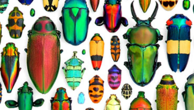 "Christopher Marley's ""Coleoptera Mosaic"""