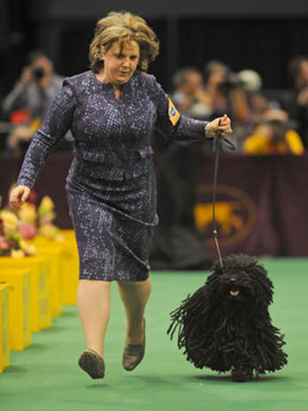 Westminster Kennel Club