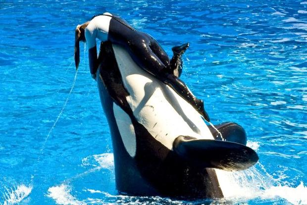 dawn brancheau seaworld trainer killed photo 1