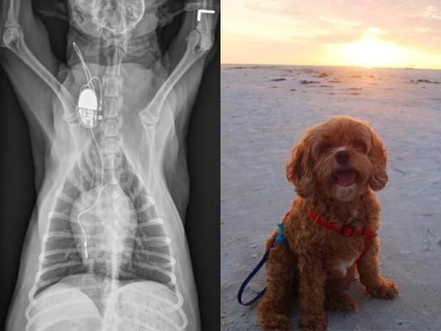 Could Miracle Medicine Save Your Best Friend's Life?