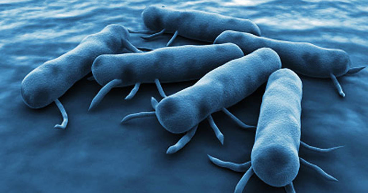 Chills - 9 Signs of Salmonella Poisoning - Pictures - CBS News