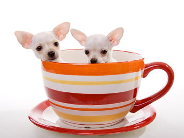 dogs-in-tea-coffee-cup.jpg
