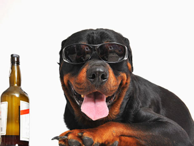 dog-and-beer.jpg